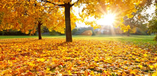 Angebote Herbstferien